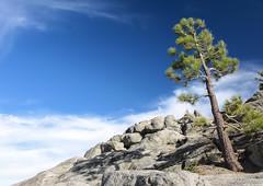 On the rocks (Hiury Tarouco) Tags: california blue sky lake tree landscape rocks united tahoe states