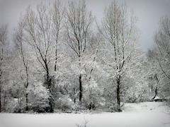 White Winter (scorpion1985x) Tags: trees winter snow cold tree scotland scottish snowing irvine