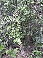 3219260996_48ed37924f_o (gray.florie) Tags: allrightsreserved usewithoutpermissionisillegal ©2009florencetomasulogray florencegray floriegrayflorencetomasulograytomasulofloriegrayfloriegraycom