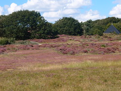 20140830 002 (Walter_71) Tags: nature dune heath noordhollands duinreservaat 20140830