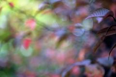 DSC_11452 vNX NA bokeh botanique (criscrot) Tags: nature bokeh nancy t lorraine arbre d3 feuille feuillage parcsaintemarie