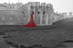 Poppy's at The Tower of London (Giuseppe Baldan) Tags: