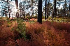 IMG_5988-1_luminous70 (bubba911t) Tags: autumn fall colorado autumncolors canon6d coloradoautumn coloradofall