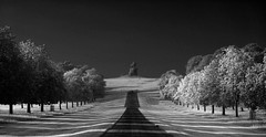 DSC00061bw (Ajeet Panesar) Tags: park morning trees light orange white black colour green nature monochrome grass fog sunrise landscape photography aperture long path walk great line figure infrared windsor f18 the in