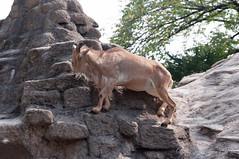 (GenJapan1986) Tags: 2009         zoo osaka japan animal nikond90
