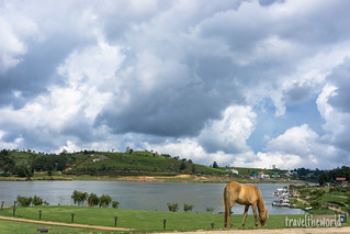 Lago caballo