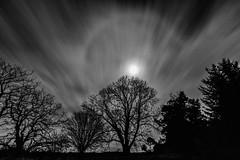 Moon Halo Mono (amcgdesigns) Tags: rafford scotland unitedkingdom gb andrewmcgavin moon moonlight trees night nighttime halo moonhalo eos7dmk2 canon1022mm longexposure slowshutter landscape darkness dark