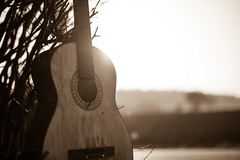 The lost chords (Ir3nicus) Tags: nikond750 dslr fullframe deutschland germany outdoor niederrhein kevelaer acousticguitar classicalguitar musicalinstrument sepia sepiaimpressions closeup 50mm afs50mm14g backlight backlit bright sun sunny sunlight countryside music guitarlove