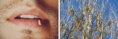 (dragoncello64) Tags: dittico art arte man bocca albero nocciolo giuliobenatti