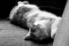 life is hard (Chantal van der Ende-Appel) Tags: cat willem
