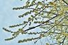 Plum blossom (namhdyk) Tags: plum plumblossom plumflower bloom canon canonpowershot canonpowershotg7x