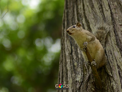 RAISE YOUR VOICE FOR THE NATURE...! (GOPAN G. NAIR [ GOPS Photography ]) Tags: world trees nature photography squirrel day photographer environmental environment nair gops gopan gopsorg gopangnair gopsphotography
