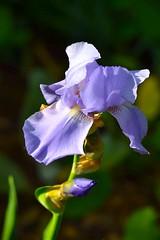 image (Eva O'Brien) Tags: flowers plants plant ny newyork flower green brooklyn garden botanical petals colorful petal botanicalgarden brooklynbotanicalgarden