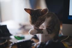 DSC00360 (benageXYZ-) Tags: cat kitten