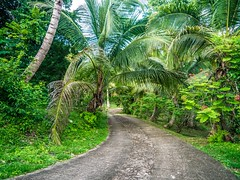 "The long drive way in Belize • <a style=""font-size:0.8em;"" href=""http://www.flickr.com/photos/91306238@N04/14387683279/"" target=""_blank"">View on Flickr</a>"