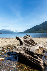 beach (mym) Tags: lake tree scotland lochlomond