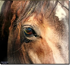 EYE & EYELASHES (jawadn_99) Tags: horses horse favorite art animal poster photography fantastic flickr angle scout explore raising galope supershot abigfave platinumheartaward coth5 mygearandme ringexcellence blinkagain shiningexcellence flickrdiamondhorses22
