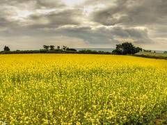 G0015803 (darrenellis1969) Tags: flowers trees summer nature yellow clouds landscape islands jersey channel gopro