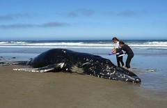 whales megapteranovaeangliae humpbackedwhale baleenwhales whaledeaths damagetoflukes whaledeathcausedbyman