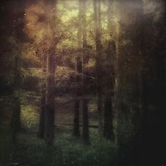 Dark forest #13