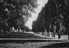 (Alessio Conti) Tags: park trees sunset white black milan film dusk milano delta olympus xa2 400 analogue ilford