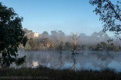 Misty Morning  in Banyule Flats (Leanne Cole) Tags: water birds fog landscape nikon photographer photos australia images victoria swamp environment fineartphotography deadtrees environmentalphotography fineartphotographer nikond800 banyuleflats environmentalphotographer leannecole leannecolephotography