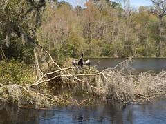 Bird (MyFWC Florida Fish and Wildlife) Tags: statepark park spring florida wildlife conservation springs wakullasprings fwc floridafishandwildlifeconservationcommission myfwc myfwccom