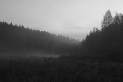 Sumussa (Suomi2005) Tags: fog suomi finland landscape nebbia paesaggio finlandia sumu yfav