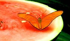 Mariposa (copito_m) Tags: naturaleza color nature animal nikon close animales mariposa mywinners abigfave aplusphoto