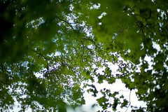 green leafs (paologmb) Tags: leica light abstract tree green art shadows 50 leafs noctilux095 paologamba type240 ppa53e