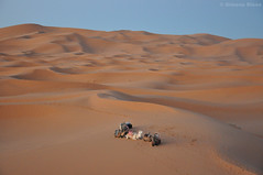 Camels and dunes, Merzouga Desert, Morocco (anyroadtakeyou) Tags: sand desert dunes morocco marruecos camels merzouga