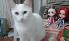 Grande Monstro Branco Peludo (emboraparawu) Tags: amanda cat doll carving luna gato aurora meow blythe boneca icy custom tbl miau repaint gmbp