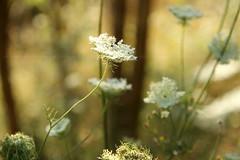 cercare (Alessandra Leonetti) Tags: luci fiori sottobosco alessandraleonetti