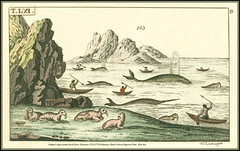 Original copper prints Jacob Xaver Schmuzer (1713-1775) Schmuzer Hand Colored Engraved Print 2945 S Mor (Morton1905) Tags: original print hand jacob s copper prints colored engraved xaver 2945 schmuzer mor 17131775