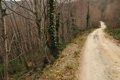 Kartepe (instagram/merdemali) Tags: road travel turkey way route roads touring yol turkish theway sakarya kartepe