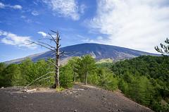From Mnt Capre, Etna (roberto_86) Tags: trees italy panorama tree volcano italia 10 sigma sicily monte 20 albero etna sicilia bronte vulcano secco 2014 capre adrano setetmbre d7000