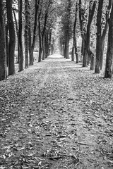 park (I.Dostál) Tags: road park autumn tree leaves path pathways vystava expored twittertuesday