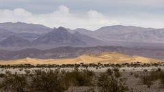 I Dream of Gardens in Desert Sand (JeniKoleva) Tags: california southwest us desert flat dunes mesquite deathvalley