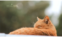 Cat .. (miss.abr) Tags: cat animal pet animals cats photo photography canon d550 natural تصويري تصوير كانون قطة