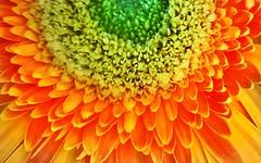 54. Flower