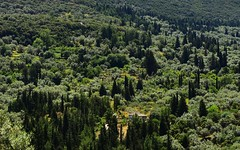 Trees 17 (orientalizing) Tags: cypress desktop eftanysi featured forested greece landscape lefkada olives trees