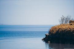 El Gouna (werxtracoo) Tags: island gouna algouna elgouna lagoon water sea redsea plants blue