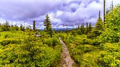 Lusen (Akito-X) Tags: bavaria bayern bayrischerwald canonefs1022mmf3545usm canoneos7dmarkii clouds deutschland forest germany green grün lusen summit wald way weg wolken schönbrunnerwald de