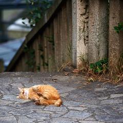 Good Day (rampx) Tags: japan cat ginger hiroshima neko   straycat tomonoura
