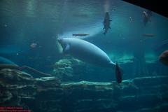 2014 - Frias e Niver de Camila Moura, EUA, Disney, Vero (Wilson Moura) Tags: zoo orlando florida eua fl seaworld zoologico nivercamila ferias2014 copyright2014wilsonpmoura