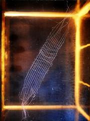 """""""The Nothing nothings"""" (Martin Heidegger) """"Das Nichts nichtet"""" - Transparent Handwoven Bracelet on an Empty Water Tank with old dirty glass ~ Handgewebtes Armband durchsichtig auf einem leeren Aquarium mit schmutzigen alten Glasscheiben (hedbavny) Tags: vienna blue light stilllife black art armband yellow handicraft aquarium austria licht stillleben outsiderart empty leer kunst himmel philosophy pale gelb bracelet artbrut nothing transparent blau colorless stern weaving schwarz schmuck weber loom handwerk durchsichtig conceptualart kette heidegger transparenz webstuhl armreifen verschlungen nichts schlingen universum milchstrasse kunsthandwerk martinheidegger kritik konzeptkunst weben durchschaubar farblos handwerkskunst schlinge schus weavingloom beadloom durchschauen unbunt schmuckkunst offensichtlich sprachspiel languagegame arthandicraft bildwirkerei hedbavny ingridhedbavny schmuckobjekt beadweavingloom perlonfaden perlnadel dasnichtsnichtet"""