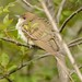 2014-05-10 Montrose Point Bird Sanctuary 13