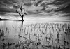 Trapped ... (zakies) Tags: tree blackwhite trapped malaysia lowtide monocrome datu lahad nikond700 sabahsunset monoscape zakiesphotography malaysianlanscape
