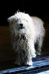 """Official Greeter at the Pub"" - San Sebastian (Donostia), Spain (TravelsWithDan) Tags: city urban dog spain pub ngc oldtown sansebastian donostia welcoming worldtrekker"