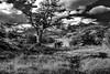 Cuernos Del Paine (Luis Fernando Barp) Tags: chile southamerica americadosul lagopehoe cuernosdelpaine pehoelagoon